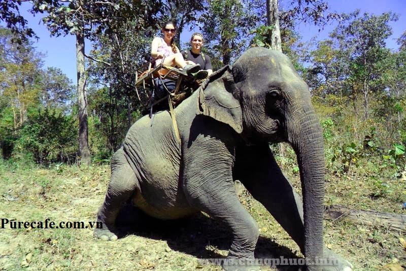 Cưỡi voi du lịch