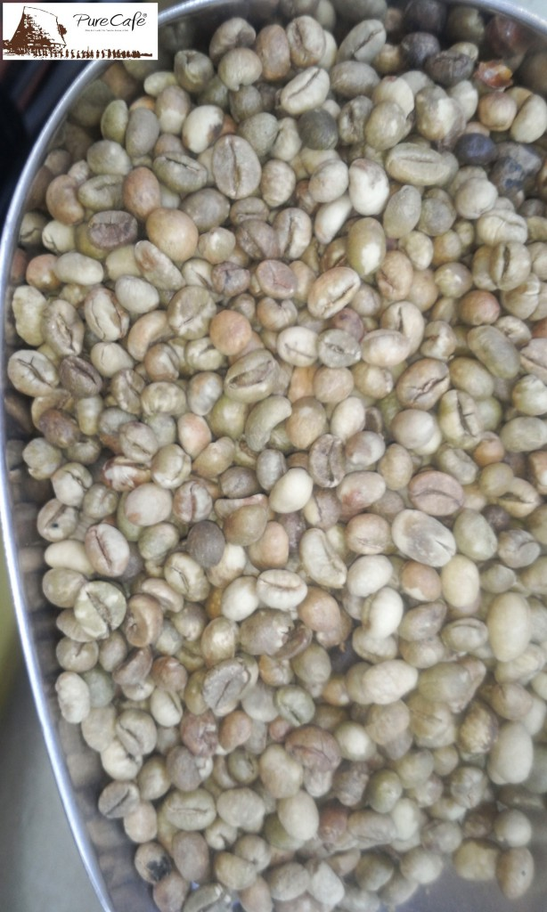 Cà phê Culi Robusta