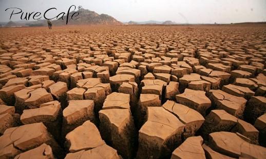 Tây Nguyên khô hạn nhất 30 năm qua