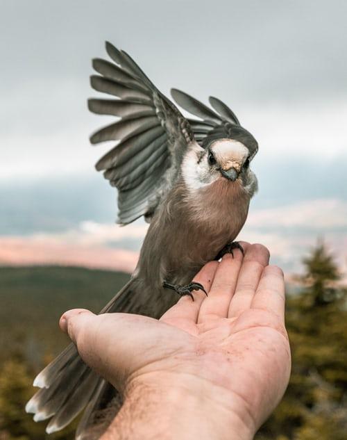 Thả chim